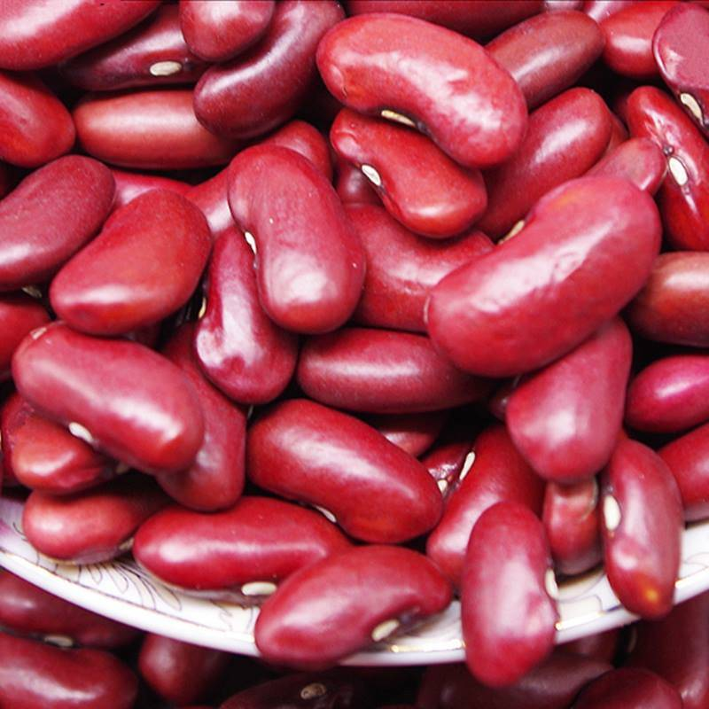 Toxins in Kidney Beans