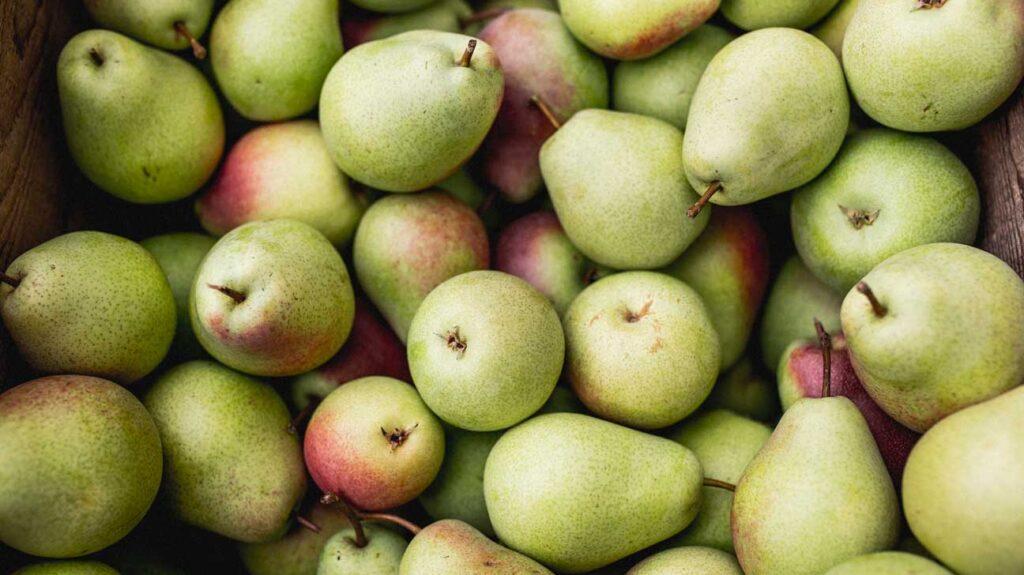 Thumbnail of Pears