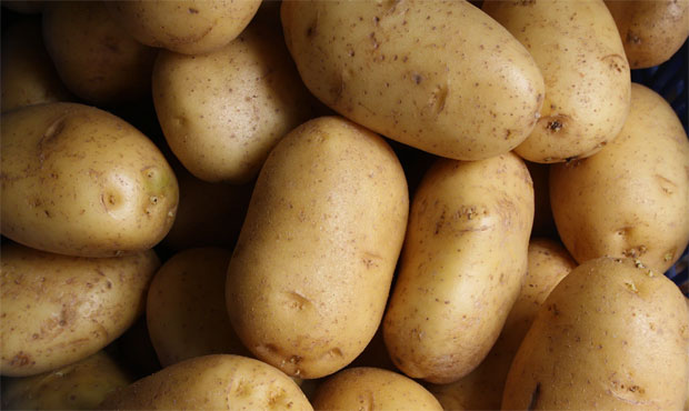 Toxins in Potatoes
