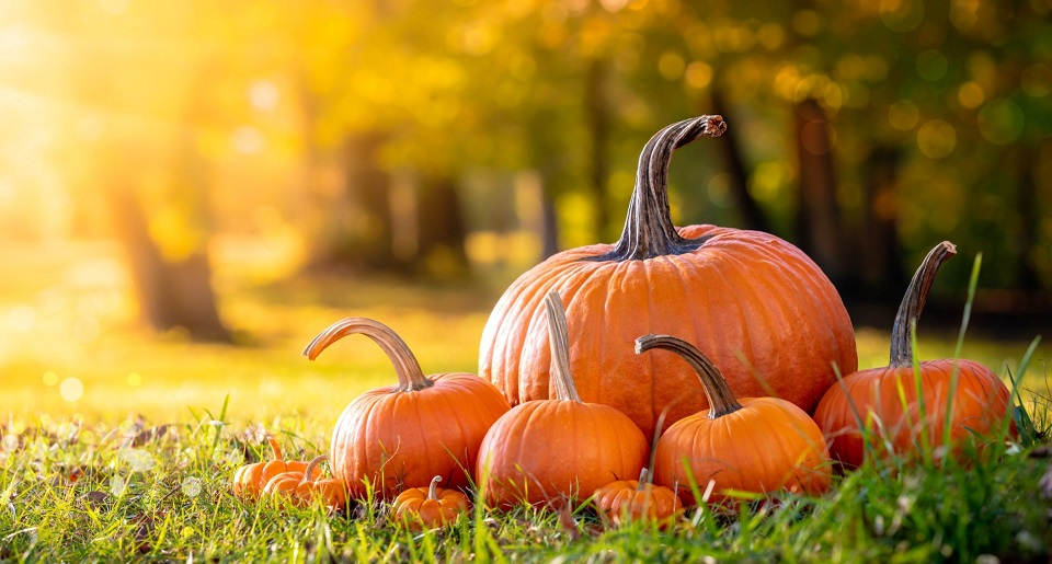 Toxins in Pumpkins